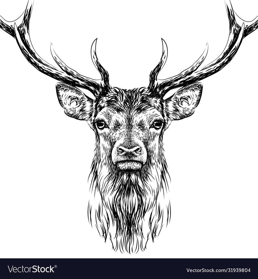 Deer sketchy hand-drawn portrait