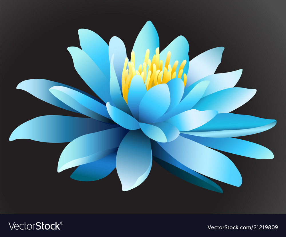 Lotus Flower On Dark Background Royalty Free Vector Image
