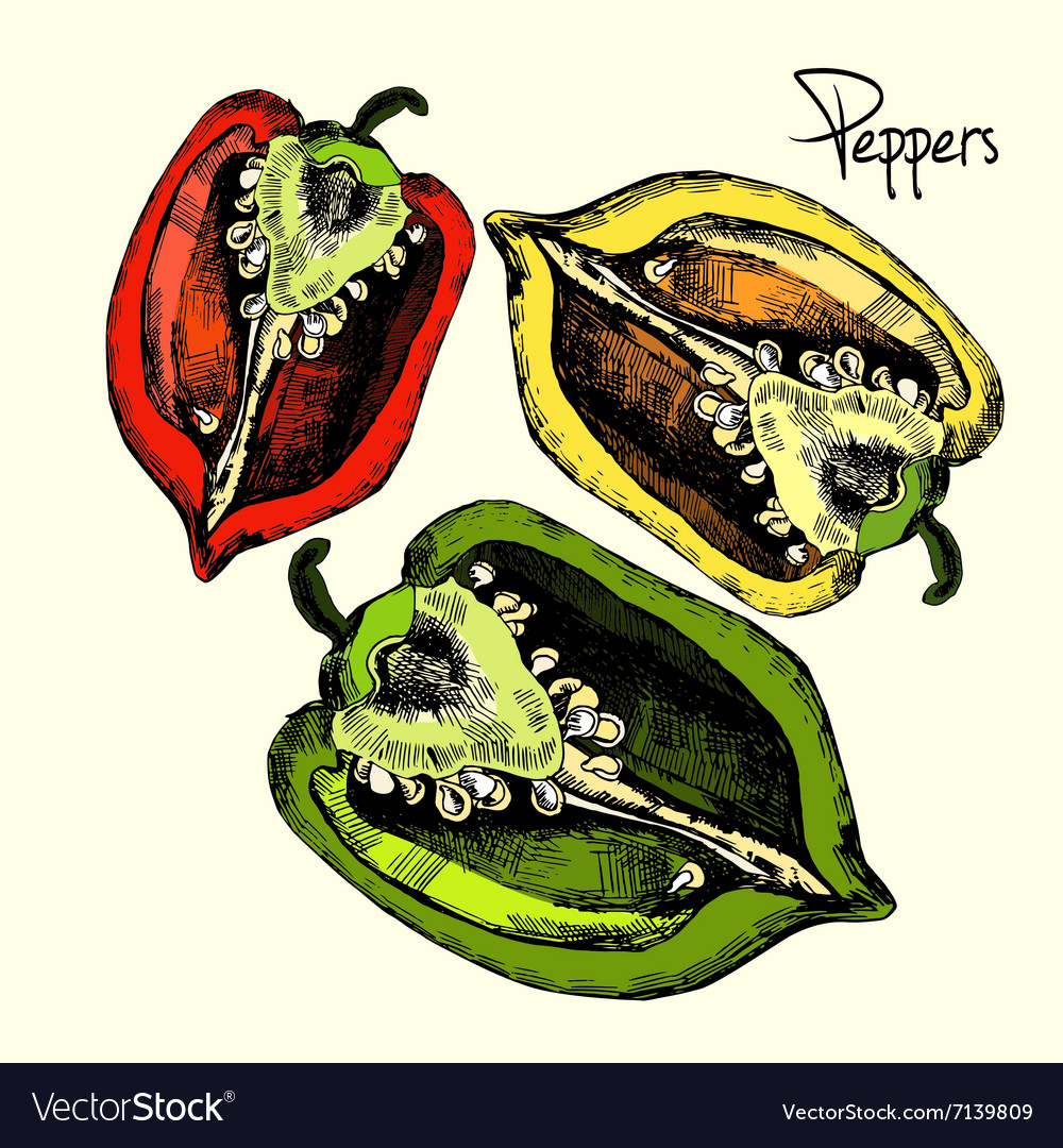 Set of peppers vector image