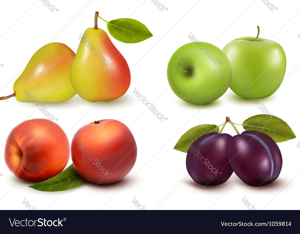 Set of fresh fruit vector image
