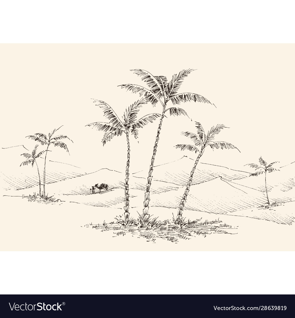 Oasis in desert hand drawing palm trees