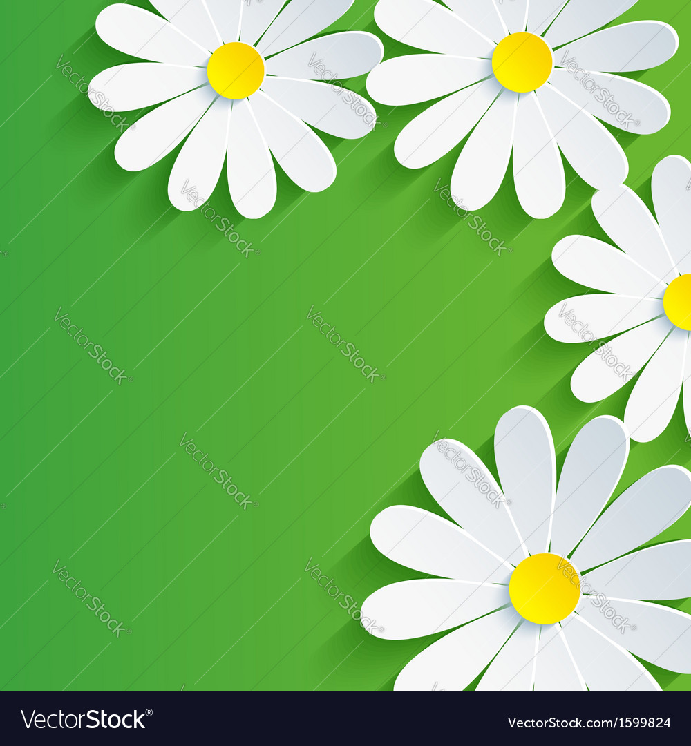 3d Flower Chamomile Spring Abstract Background Vector Image