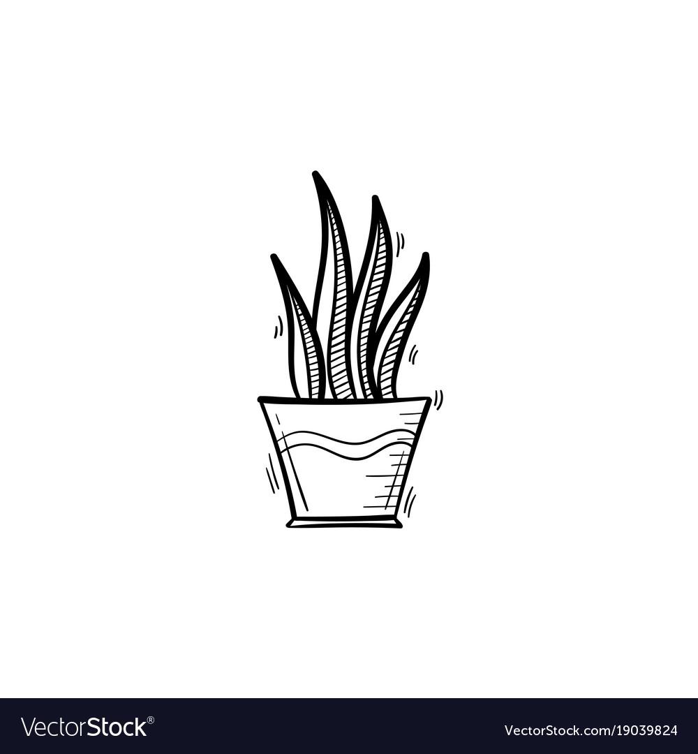 Sansevieria trifasciata hand drawn sketch icon