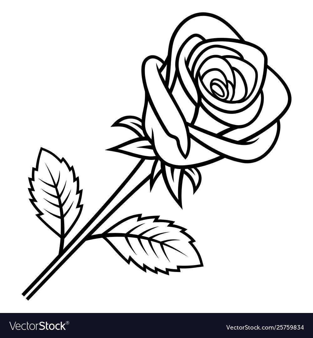 Rose sketch 005