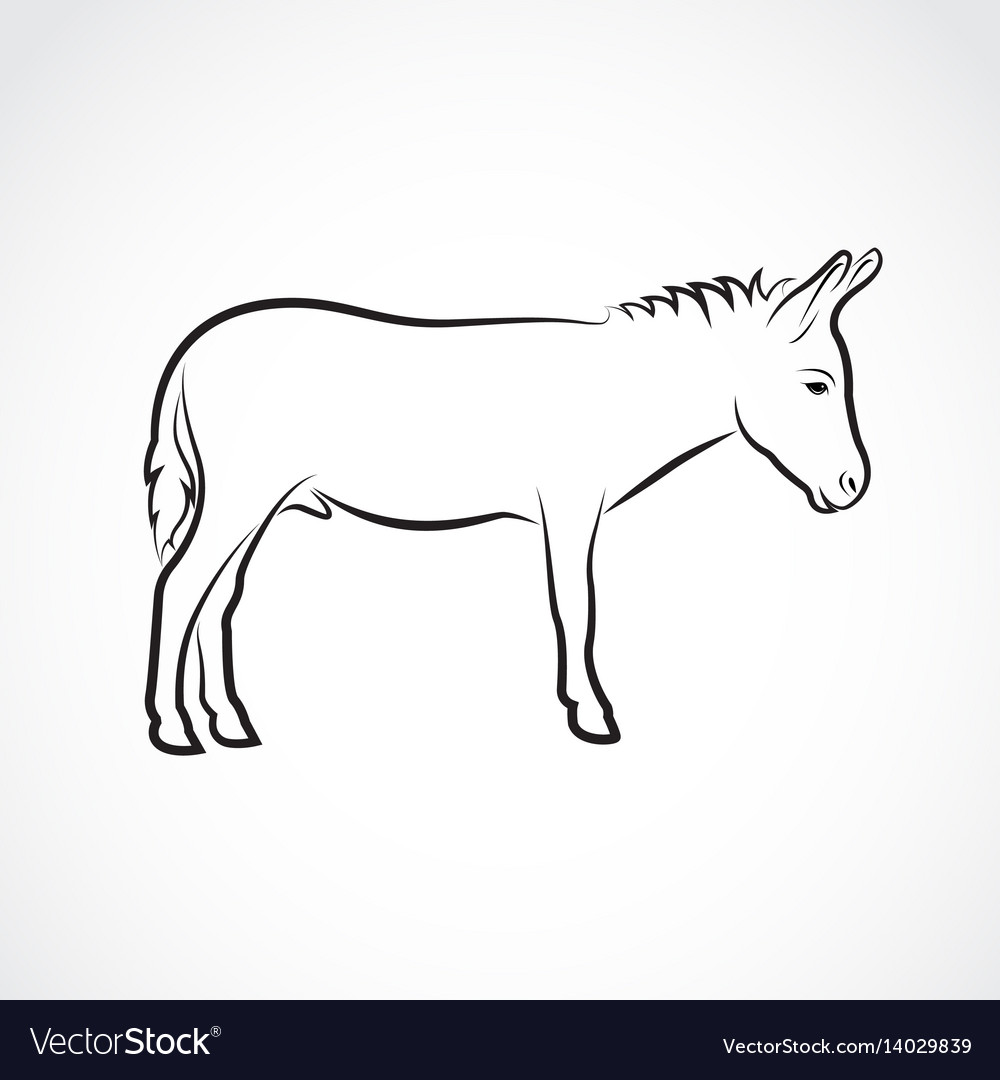A donkey on white background wild animals
