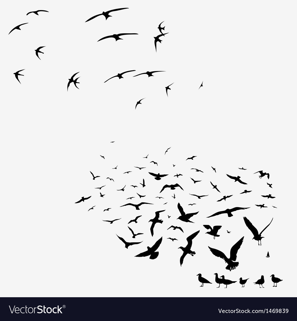 Pack of seagulls and pack of swallows