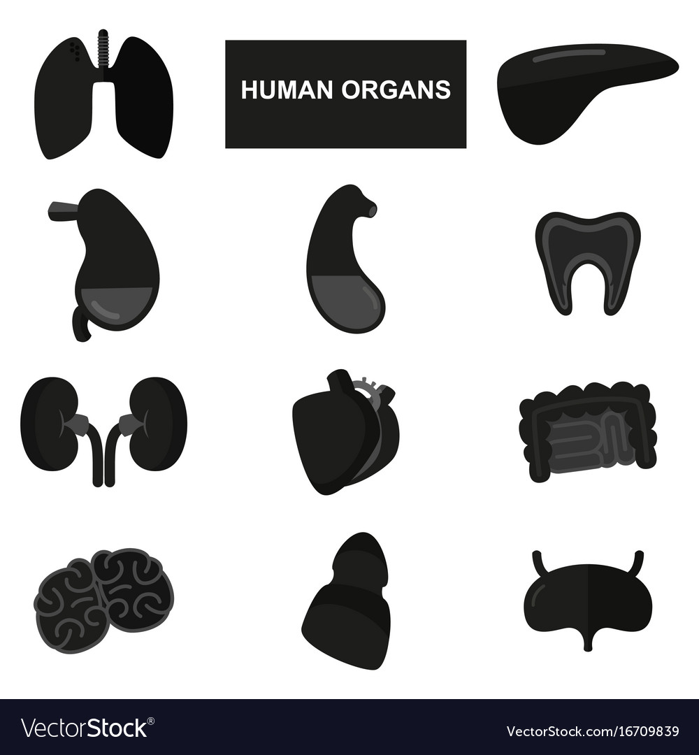 Silhouettes of human organs on white background
