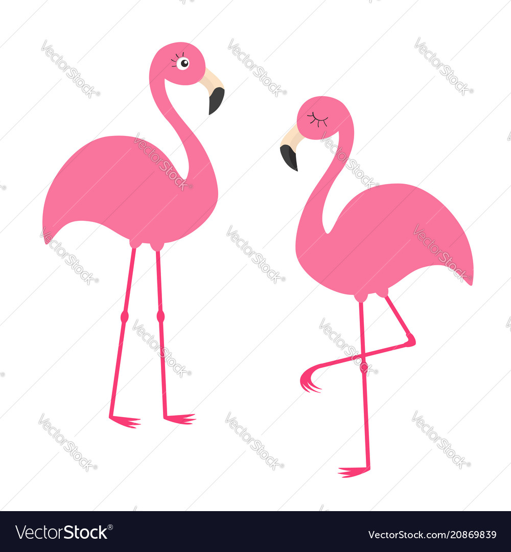 Two pink flamingo set exotic tropical bird with