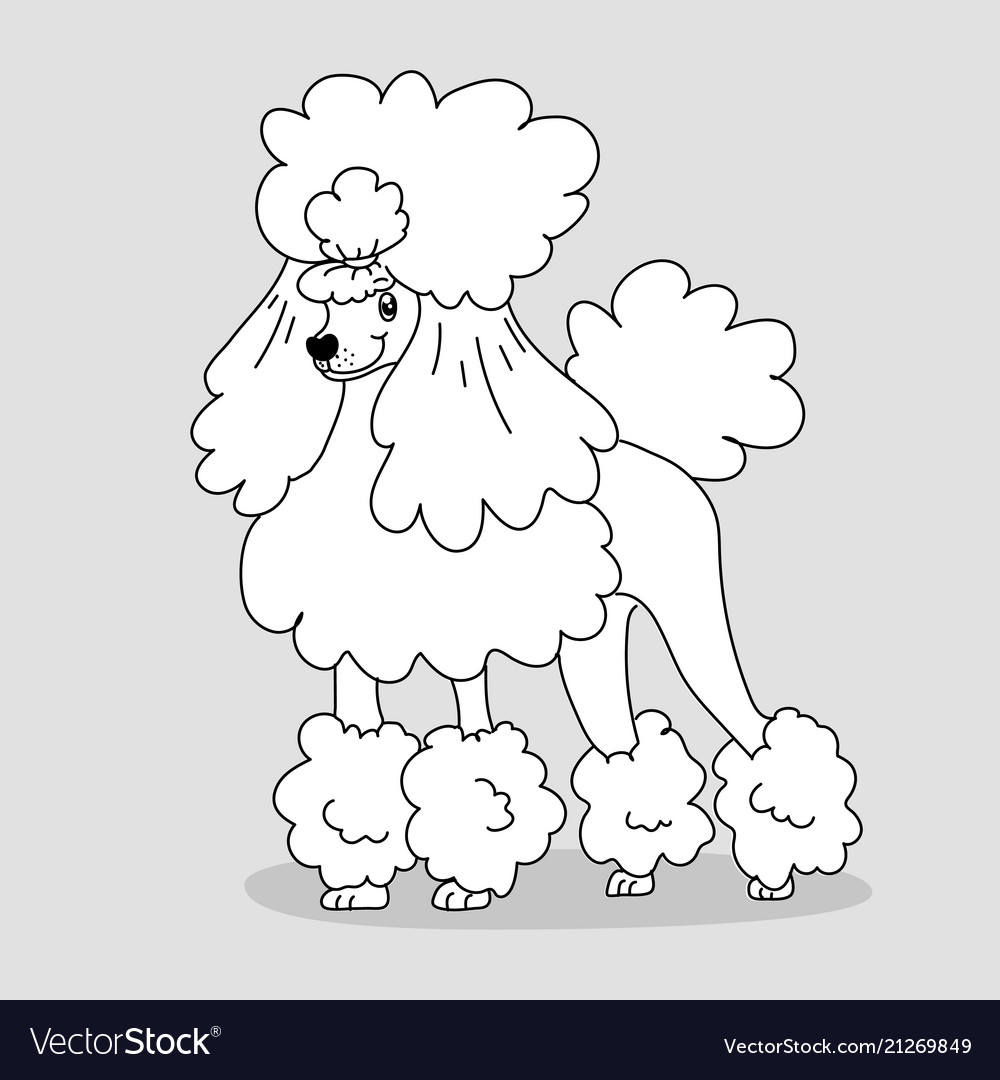 Elegant groomed poodle with hairstyle and feather