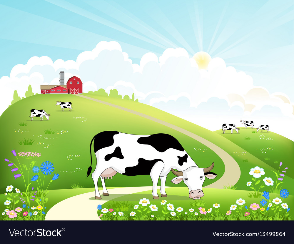 Dairy farm and a herd of cows on a beautiful