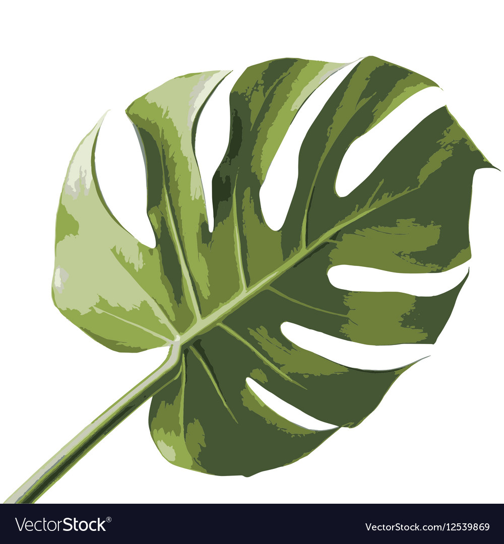 tropical palm leaf royalty free vector image vectorstock