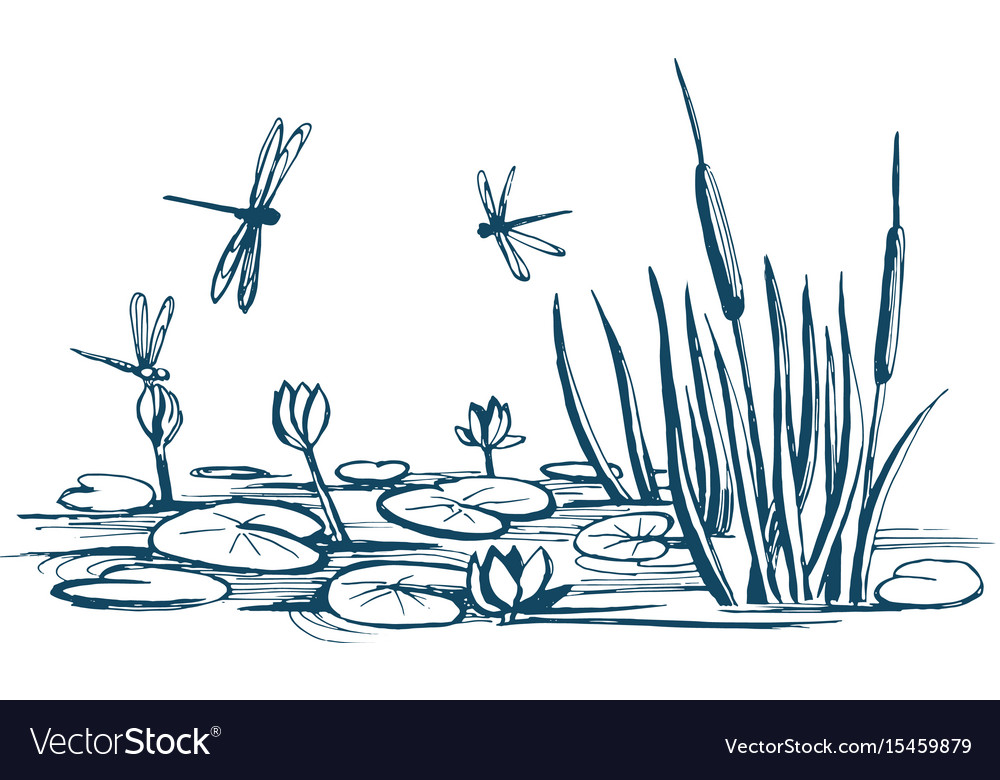 Water lily and reeds on the pond