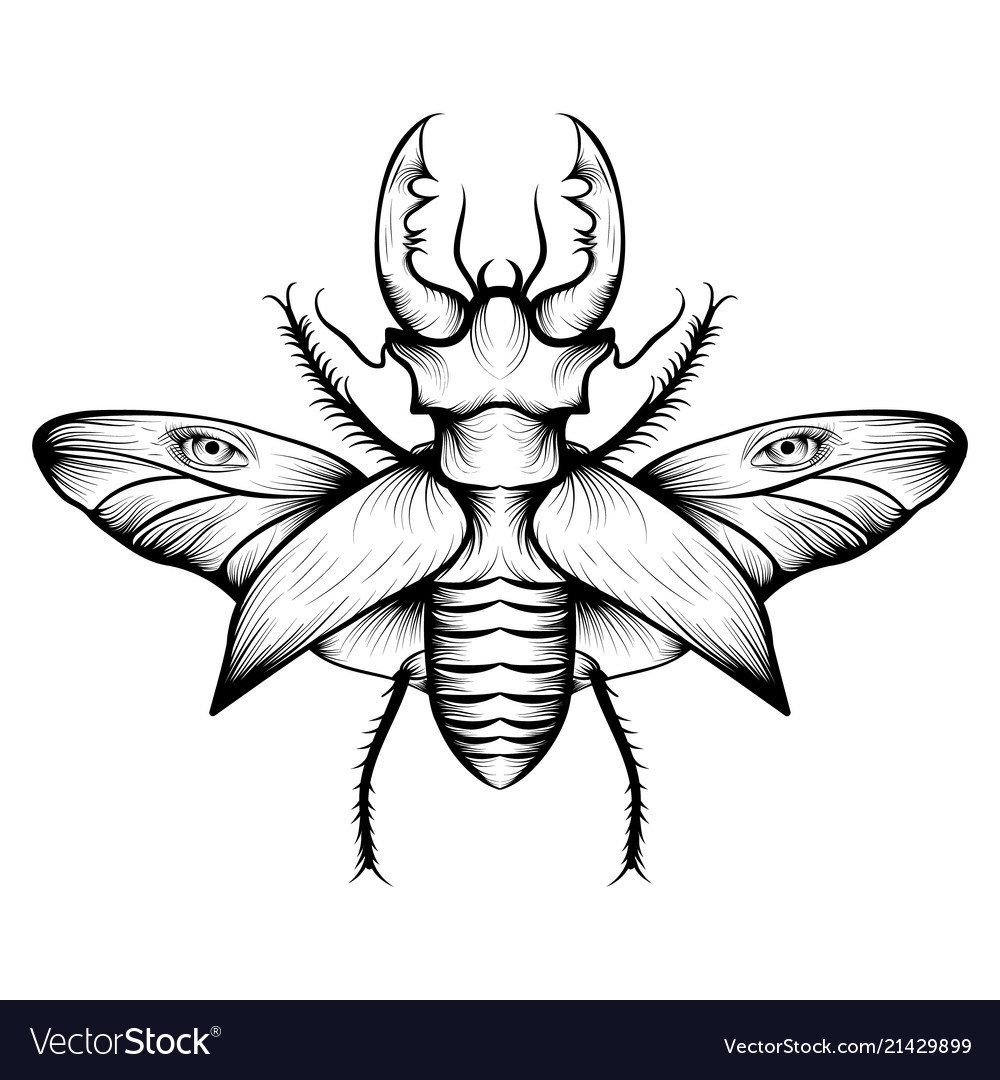 monochrome stag beetle drawing royalty free vector image