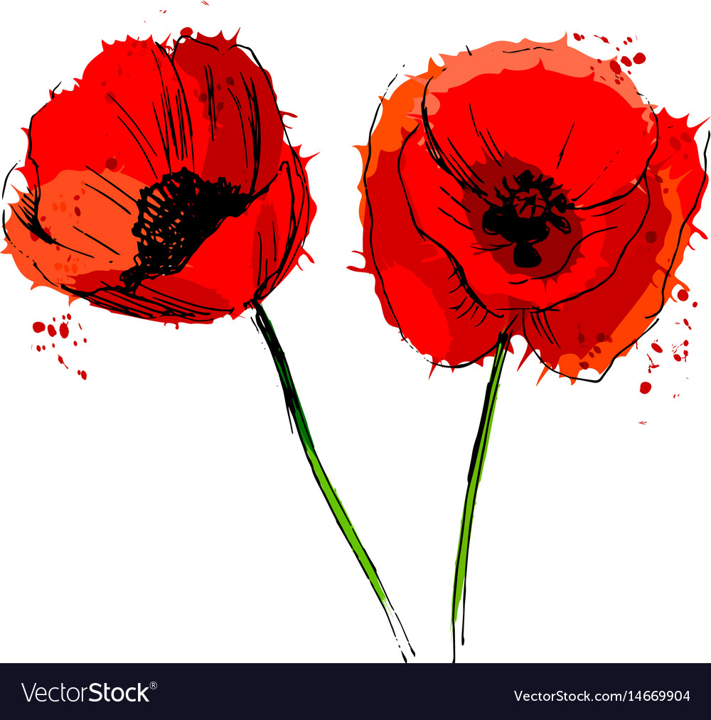 Colored of poppy flowers vector image