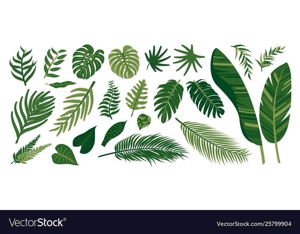 Tropical Leaves On White Background Royalty Free Vector Search for more beautiful pictures and free images on picjumbo! vectorstock