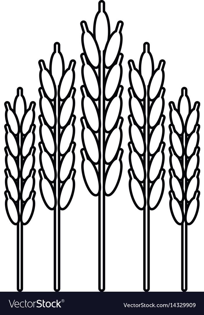 Harvesting wheat ears thin line