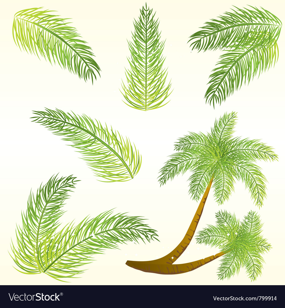 Tropical palm tree leaves vector image