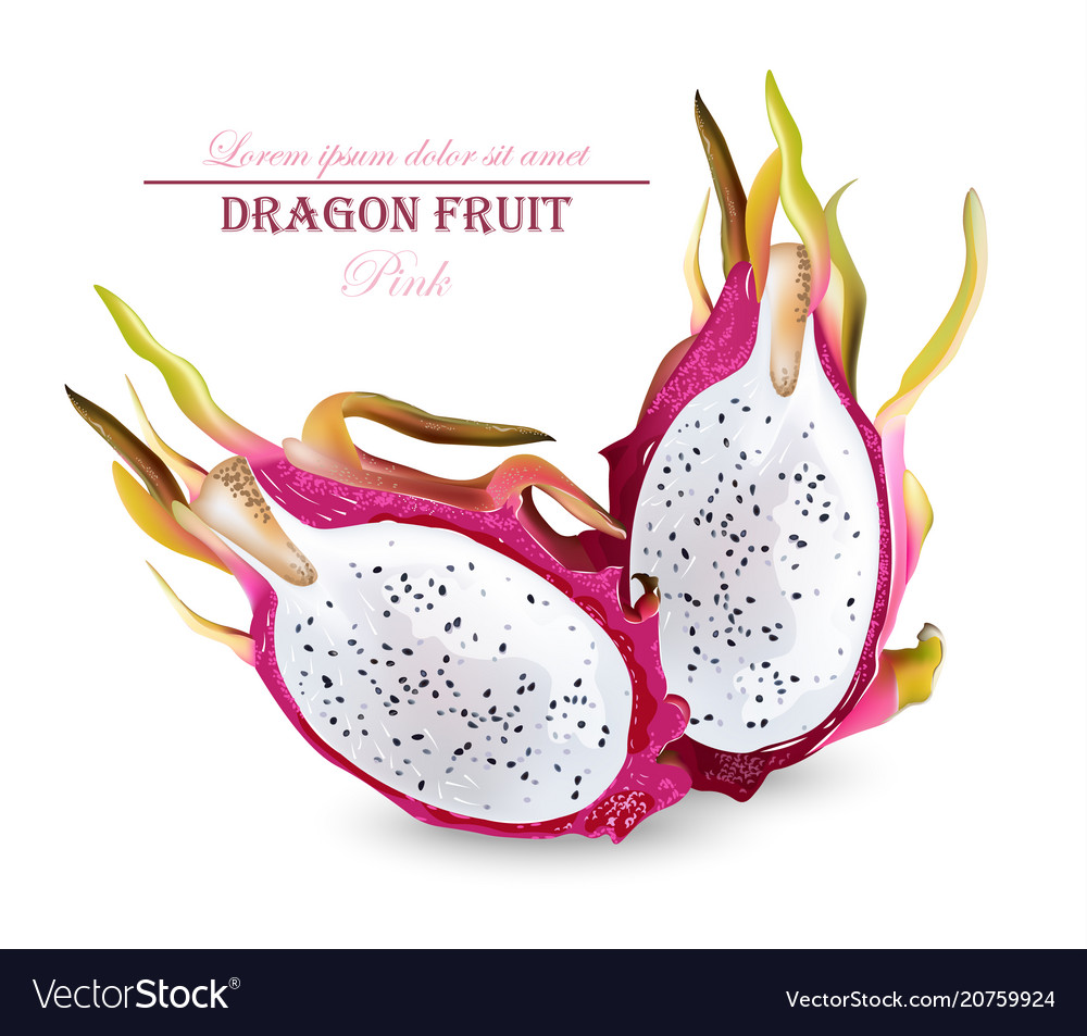 Dragon fruit isolated realistic summer
