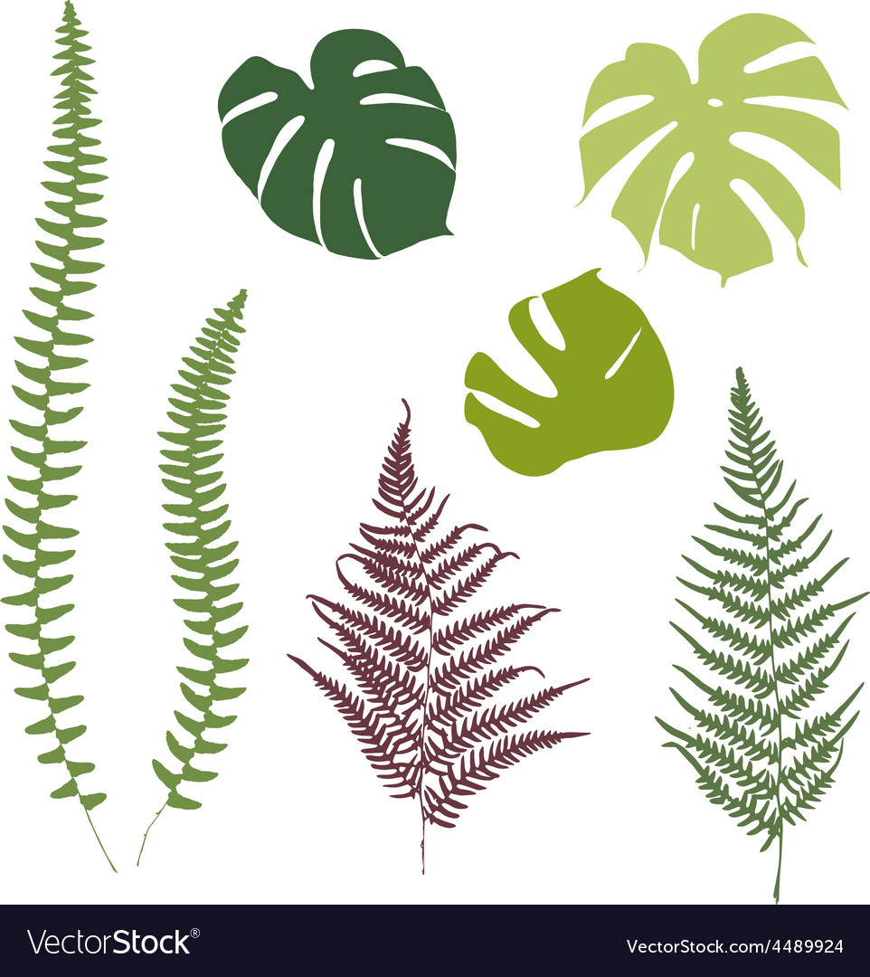 Fern and monstera silhouettes Isolated on white