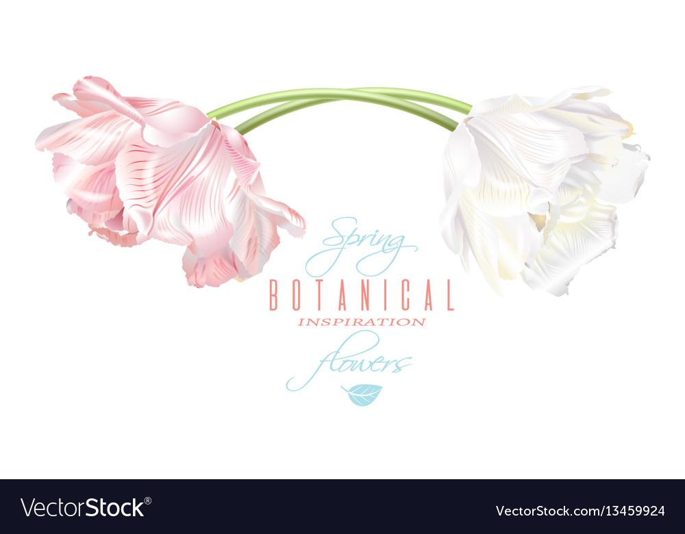 Tulip horizontal card