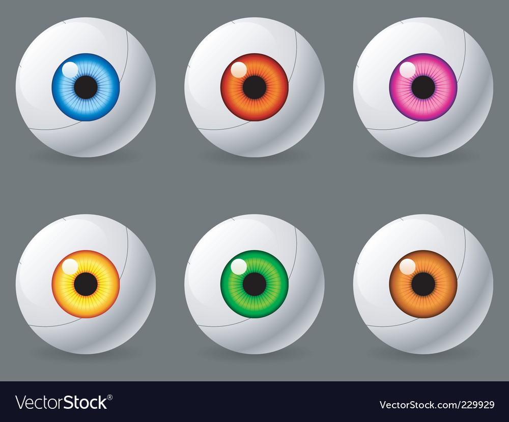 Human eyeballs vector image