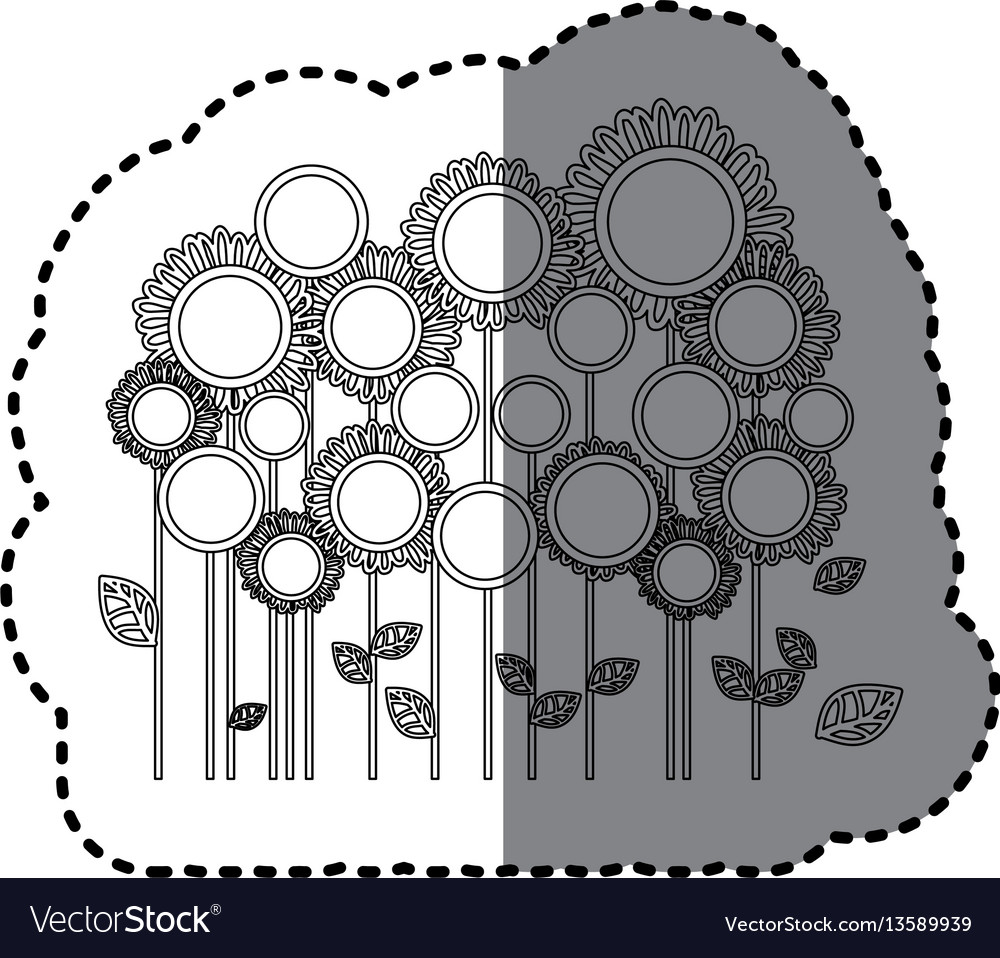Grayscale sticker with sunflowers field vector image