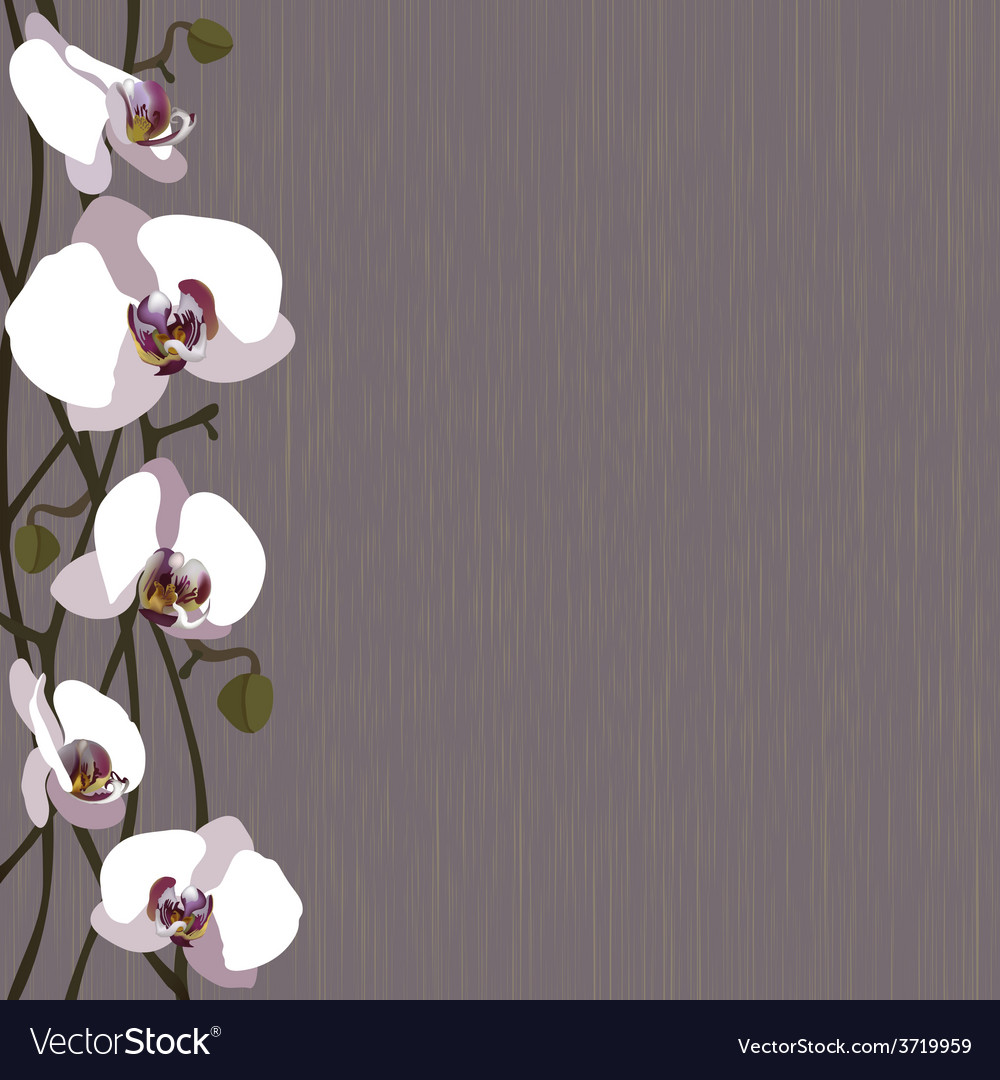 Purple background with white orchid flowers vector image