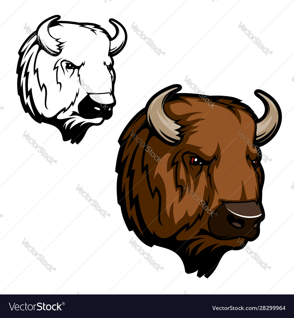 Head bison buffalo or wild ox bull animal