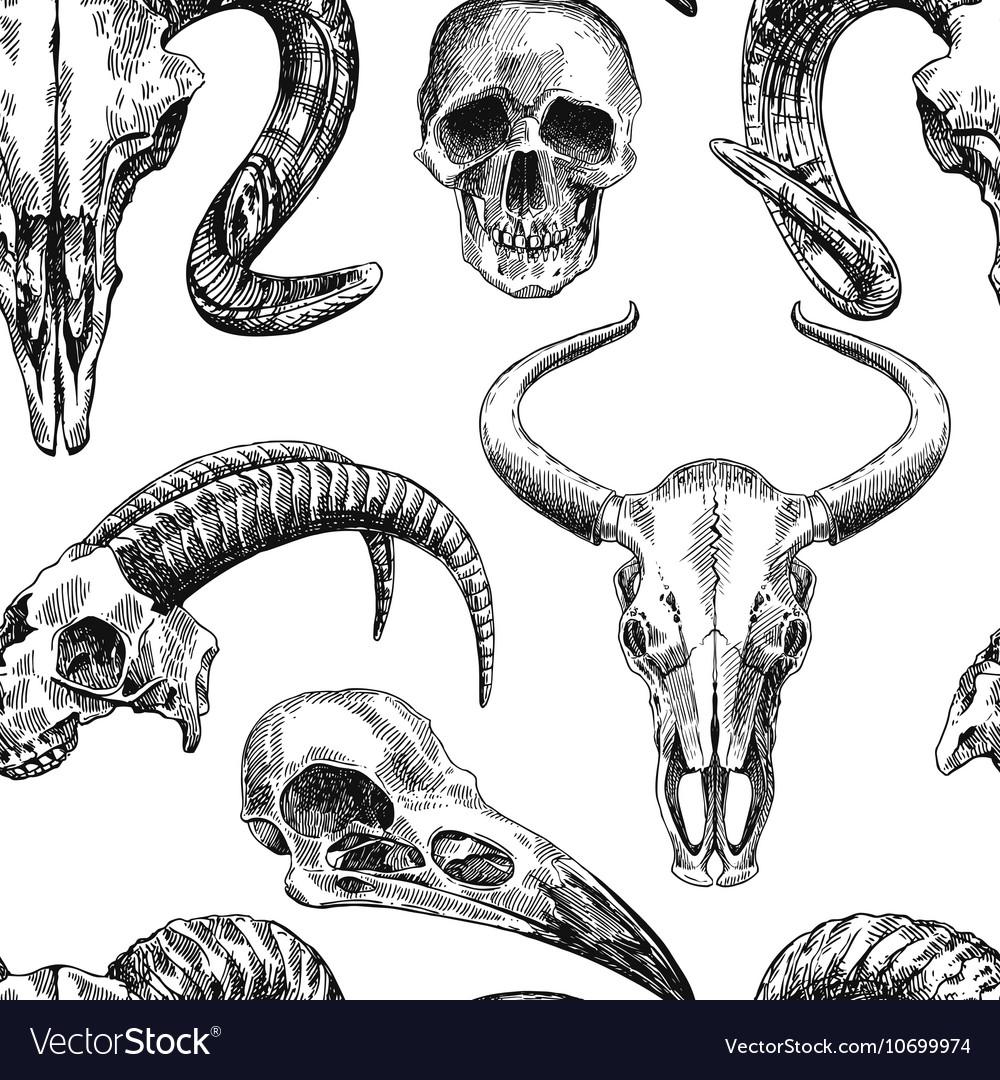 animal skull royalty free vector image vectorstock