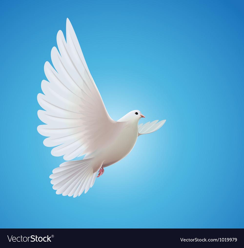 white dove royalty free vector image vectorstock