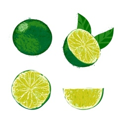 A lime fruit vector