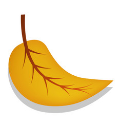 birch yellow leaf icon realistic style vector image