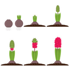 cartoon color phases plant growth set vector image