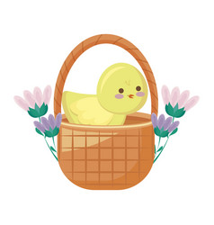 cute chicken in basket with flowers vector image