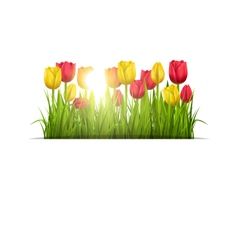 Green grass lawn with tulips and sunlight isolated vector image
