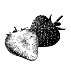 Hand drawn sketch of strawberry in black isolated vector