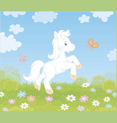 Little white pony on a flower meadow vector