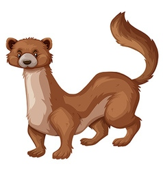 Wild mongoose with brown fur vector