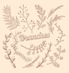branches hand drawn floral doodle rustic plants vector image