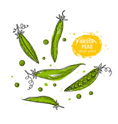 green peas hand drawn in the style of vector image