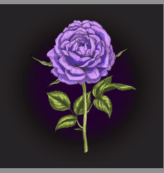 Hand drawn violet rose flower isolated on black vector