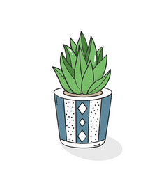 hand drawn succulent in flower pot vector image