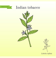 Indian tobacco lobelia inflata or asthma weed vector