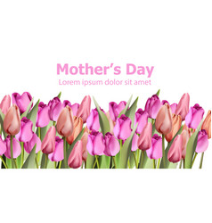 tulips card watercolor mother day holiday vector image