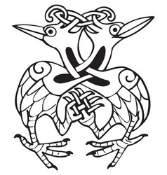 Celtic design with knotted lines of two dove birds vector