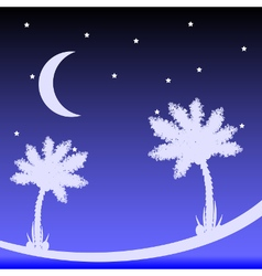 Palm tree at night vector image