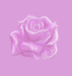 rose background vector image