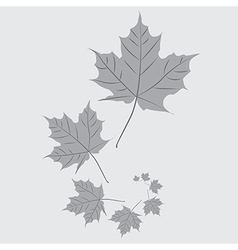 Falling leafs vector image