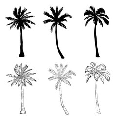 palm tree silhouette icons on white background vector image