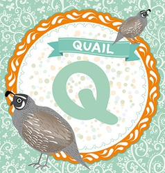 ABC animals Q is quail Childrens english alphabet vector image vector image